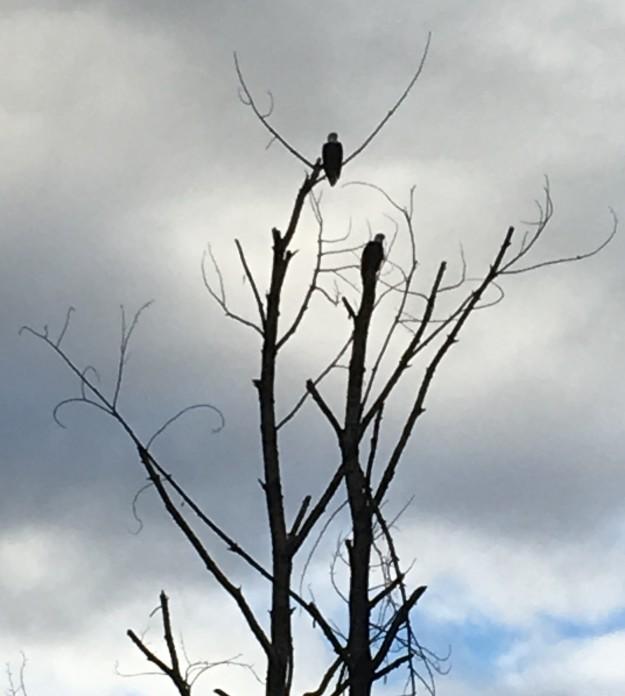 001-eagles